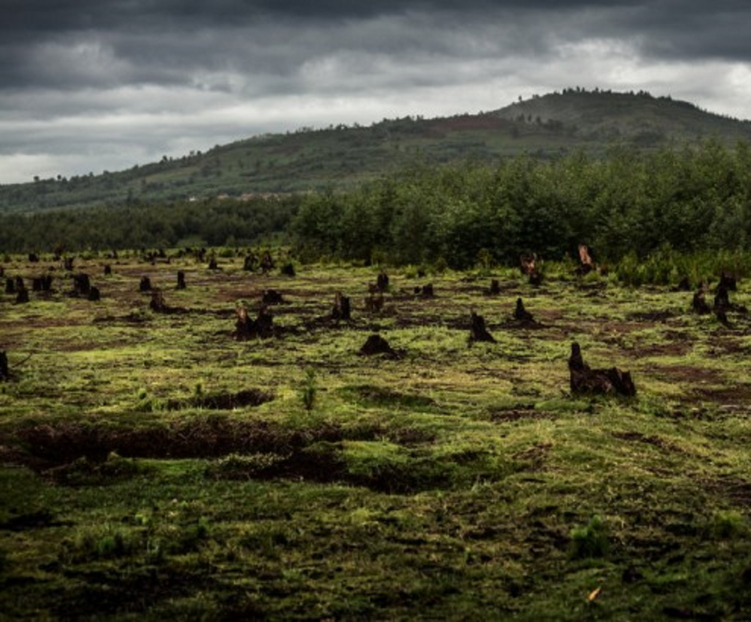 What-does-Greenpeace-s-palm-oil-report-mean-for-IOI-RSPO-e1491378912638